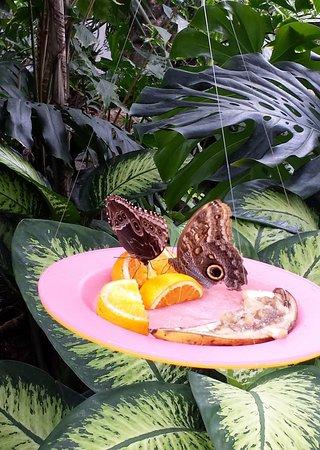 Cambridge, Canada : owl eye butterfly