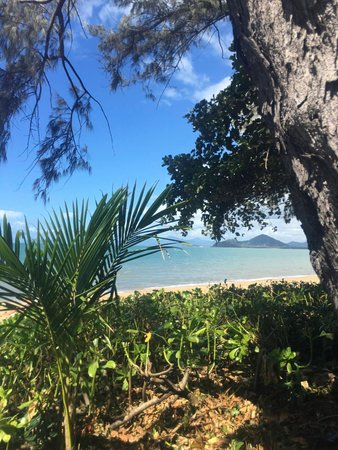 Palm Cove, Australië: Looking through the trees from the street