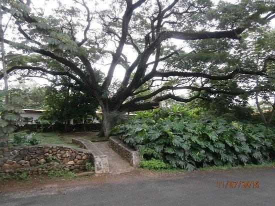Hacienda Guachipelin: Entrada hacia las habitaciones
