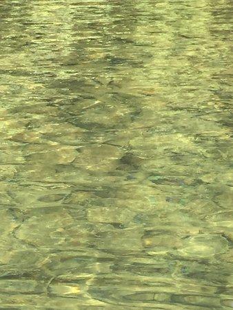 Lake Cowichan, Canadá: photo2.jpg