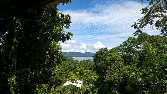 Cashew Hill Jungle Cottages : 20160719_101756_HDR_large.jpg