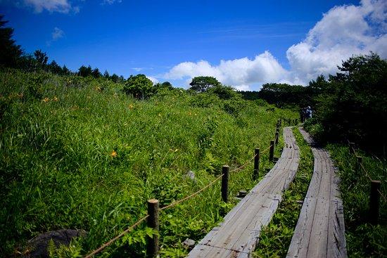 Shimosuwa-machi, Japan: 八島ヶ原湿原の木道