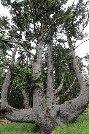 Tillamook, Oregón: Octopus Tree