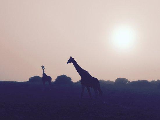 Shamwari Game Reserve, Νότια Αφρική: photo3.jpg