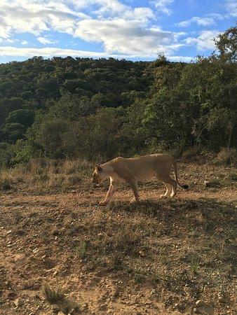 Shamwari Game Reserve, Νότια Αφρική: photo4.jpg