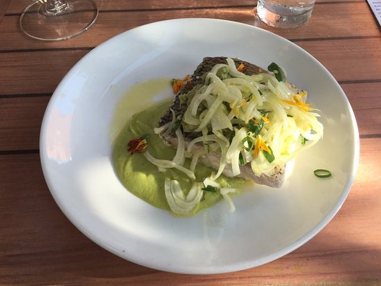 Motley Cow Cafe : Whitefish with smashed avocado and fennel slaw. Really good!