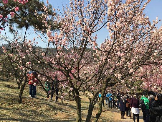 ShiMei Temple Park