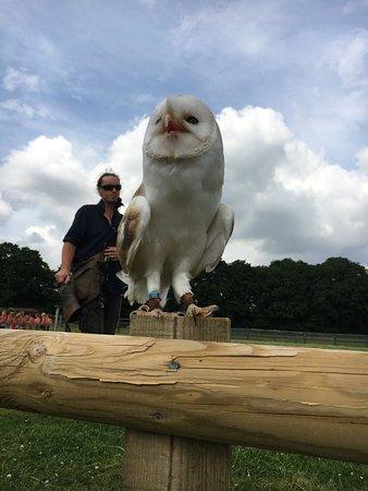 Woodchurch, UK: photo1.jpg
