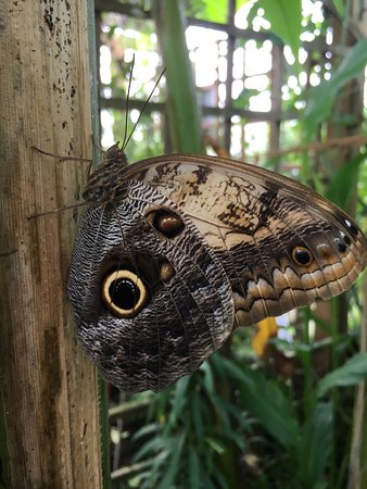 Woodchurch, UK: photo7.jpg