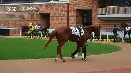 Foto de Hakodate Horse Racetrack