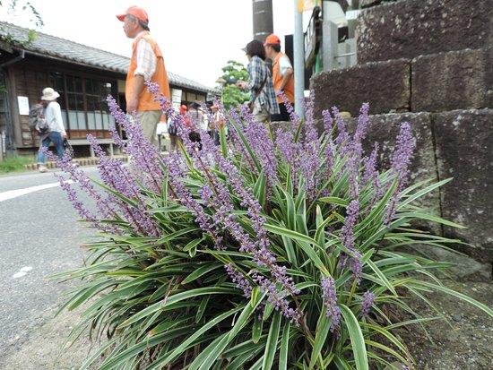 Handa, Japão: ヒガンバナ開花期は、ボランティアガイドさんが待機していることもあります。