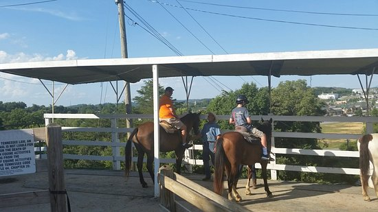 Five Oaks Riding Stables: 20160720_180857_large.jpg