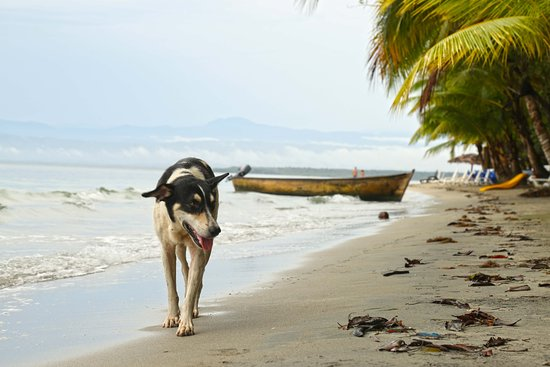 Bocas Town, Panamá: Nice calm beach
