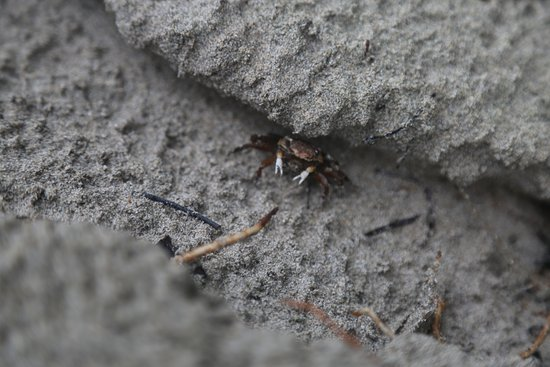 Pueblo de Bocas, Panamá: Crabs everywhere