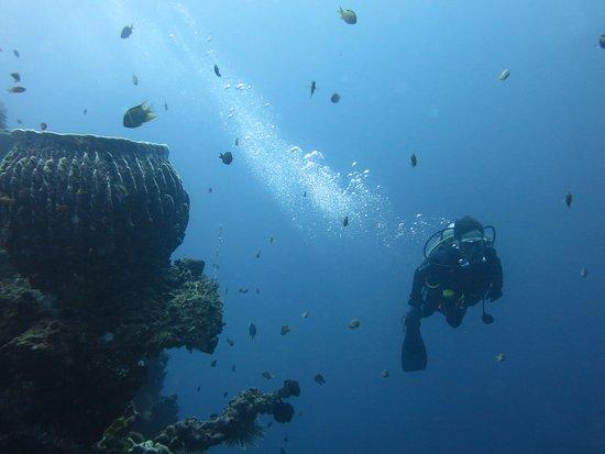 Tulamben, Indonesien: diving