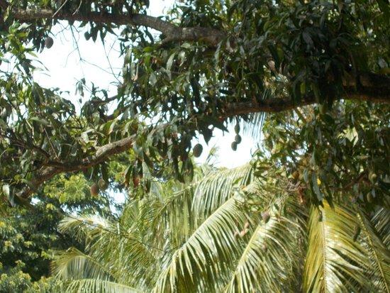 Caribe Sky Canopy Tour : DSCN0324_large.jpg