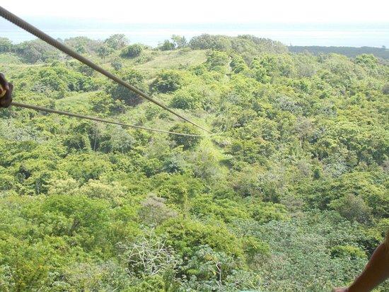 Caribe Sky Canopy Tour : DSCN0336_large.jpg
