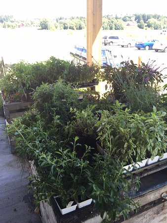 Conway, Waszyngton: Fresh Herbs