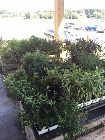 Conway, Вашингтон: Fresh Herbs