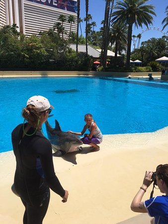 Siegfried & Roy's Secret Garden and Dolphin Habitat: Meet and greet with the dolphins.