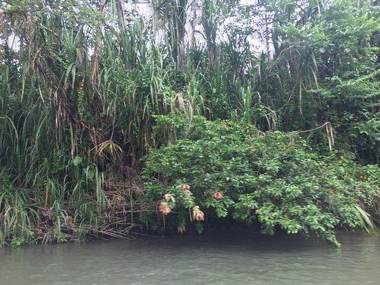 Samasati Retreat & Rainforest Sanctuary: river nearby,... amazing Costa Rican forests!