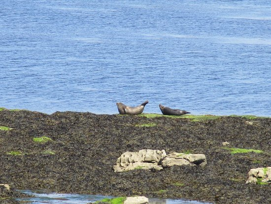 Faherty Day Tours: The Aran seals :)