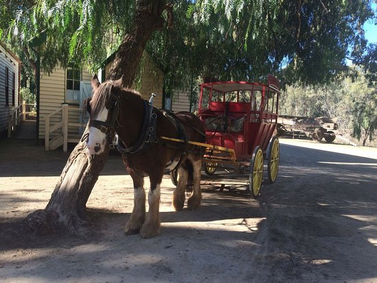 Swan Hill, Australia: Horse and cart