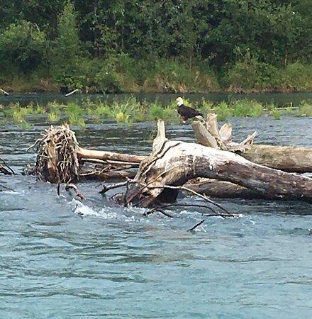 Cooper Landing, AK: 38 eagles on our 12 mile trip