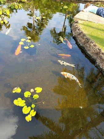 Sheraton Maui Resort & Spa : 20160719_073607_large.jpg