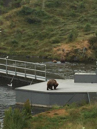 Kodiak, Аляска: photo3.jpg