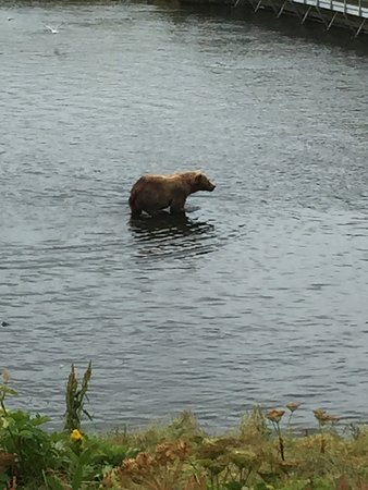 Kodiak, Аляска: photo4.jpg