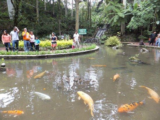 Foto de parque de los tecajetes xalapa estanque con for Fuentes con peces