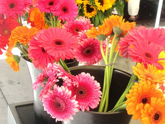 Саннивейл, Калифорния: Flowers, Sunnyvale Farmers Market, Sunnyvale, Ca