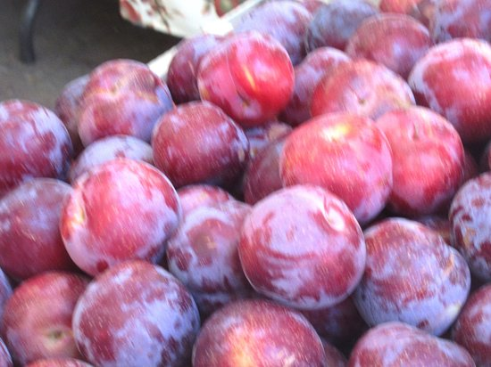 Σάνιβεϊλ, Καλιφόρνια: Summer Plums, Sunnyvale Farmers Market, Sunnyvale, Ca