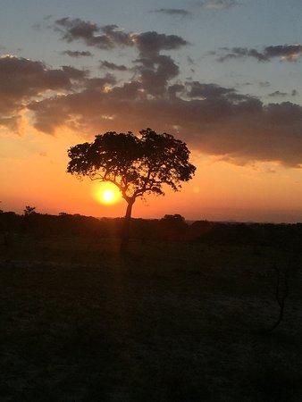 """Mala Mala Private Game Reserve, Sudáfrica: ...""""sempre nel cuore""""...."""