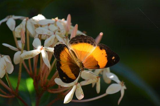 Kewarra Beach Resort & Spa: butterfly outside my bungalow