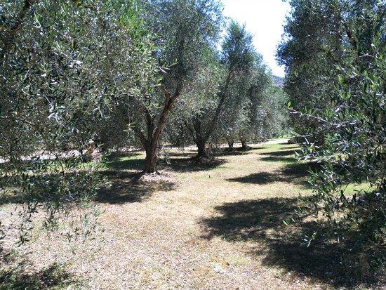 Montemerano, إيطاليا: IMG_20160720_151232_large.jpg