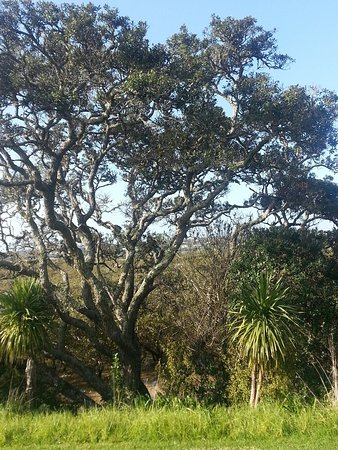 Orewa, Nowa Zelandia: Typical NZ landscape on walk