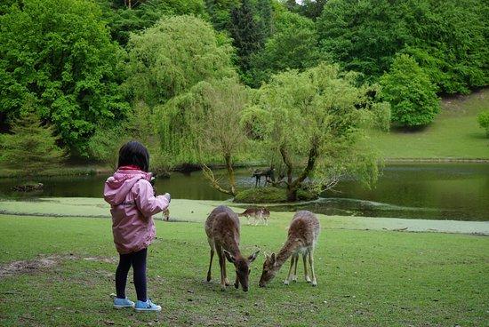 Rosengarten, Γερμανία: photo0.jpg
