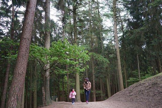 Rosengarten, Γερμανία: photo1.jpg