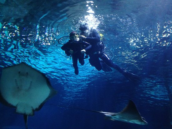 Immersion con tiburones Aquarium Barcelona