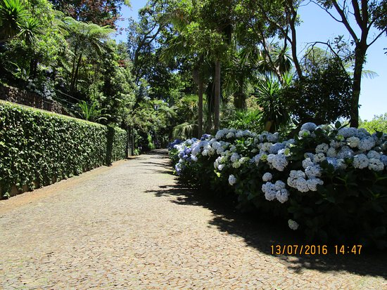 monte palace tropical garden one of many hydrangea avenues - Tropical Garden 2016