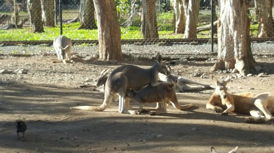 Currumbin, Australia: 20160701_170828_large.jpg
