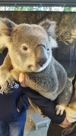 Currumbin, Australia: 20160701_175845_large.jpg