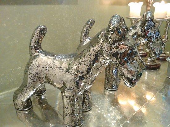 Settle, UK: Glamorous dogs