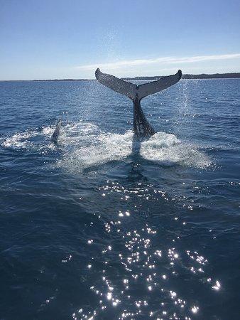 Hervey Bay, Australia: photo1.jpg