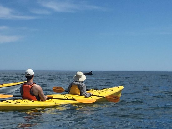 Grand Manan, Canadá: After staying Compass, we watching whales by using its relate see kayak service
