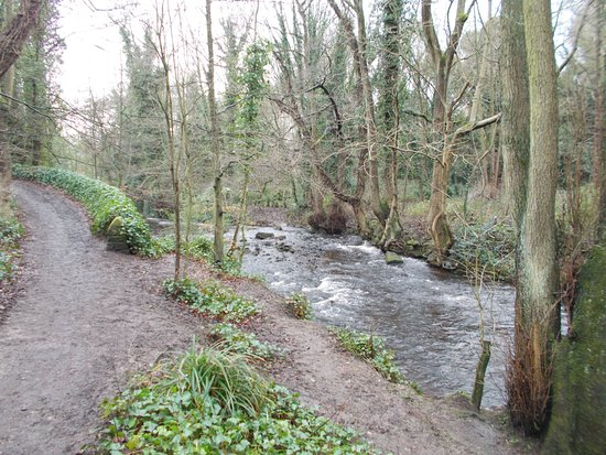 Rivelin Valley Nature Trail: Lower section from mill dam to Rivelin Valley Rd.