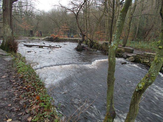 Rivelin Valley Nature Trail: Curved weir and site of old mill pond to right