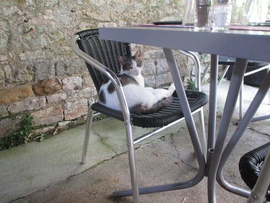 SY La Terrasse : We are cat lovers and this regular visitor managed to pick out the people who liked cats.